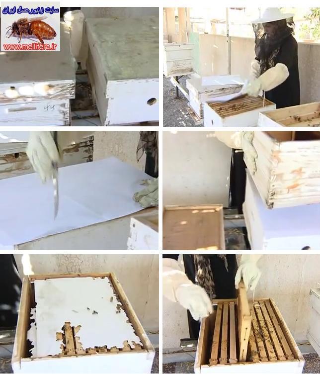 روشهای ادغام در کندوی زنبورعسل