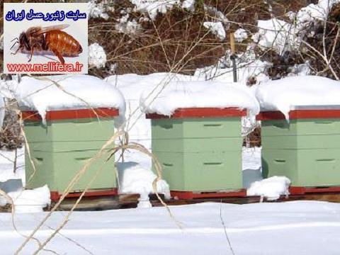 زمستان گذراني زنبورعسل