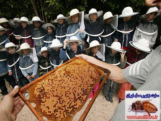 اموزش زنبورداري براي مبتديان