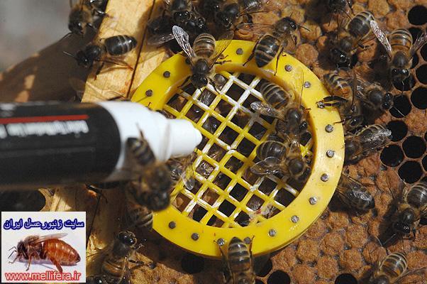 رفتار با زنبورعسل