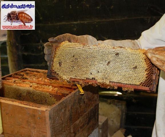 برداشت عسل از كندو
