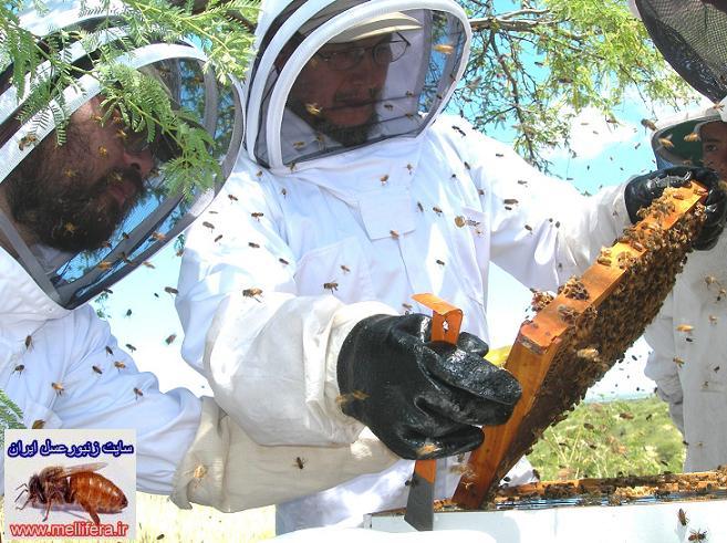 نحوه بازديد كندوهاي زنبورعسل