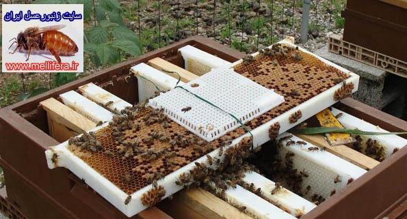 قفسهاي فشاري ملكه زنبورعسل
