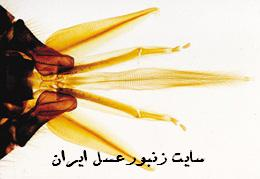 حس چشايي زنبورعسل