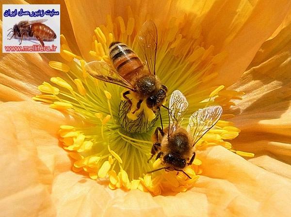 مراحل ساخت عسل