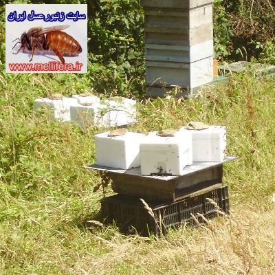ايستگاه جفتگيري ملكه زنبورعسل