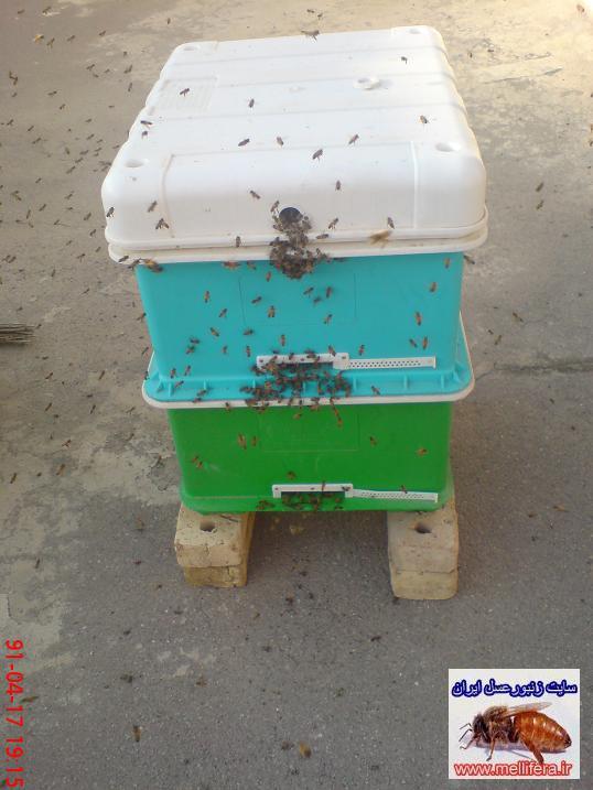 جمعيت زنبورعسل