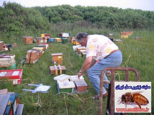 ايستگاه پرورش ملكه زنبورعسل