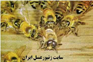 نر كشي زنبوران نز